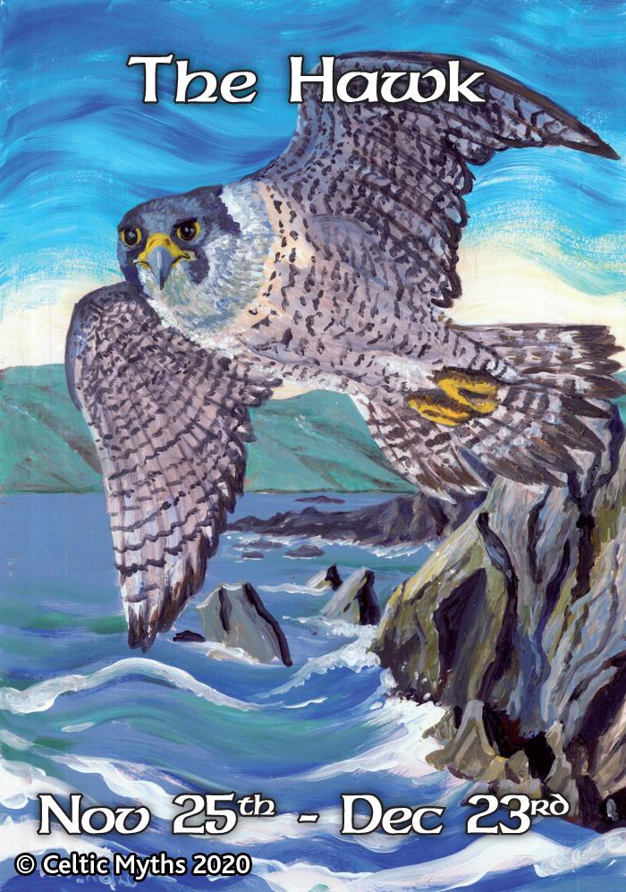 The Hawk - print